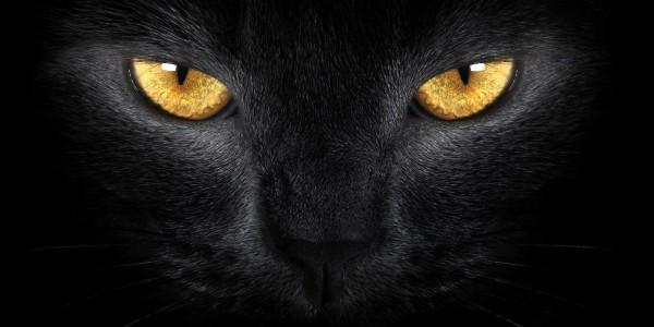 Пути кошачьи неисповедимы