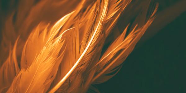 Намокнут, сгорая все перья