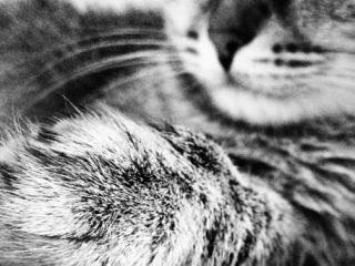 О том, кого моя кошка любит больше, чем меня