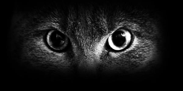 Кошкой